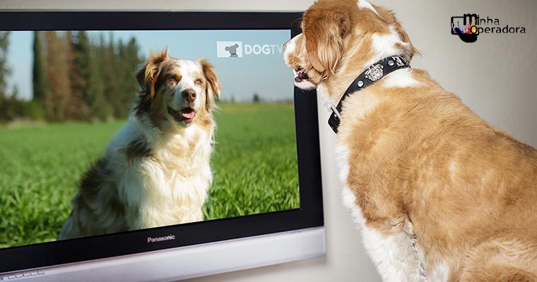 Vivo TV inclui em sua programação canal exclusivo para cães