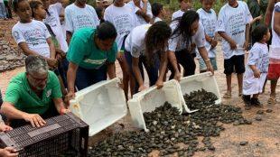 Instituto NET Claro Embratel devolve à natureza mais de oito mil filhotes de Tracajás