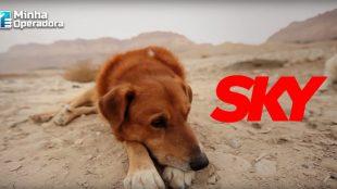 Sky abre sinal de canal exclusivo para público canino