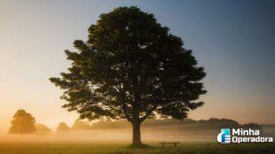 Roqueiro terá de cortar árvore que interfere em telecomunicações