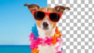 Como remover fundo de fotos - cachorro com óculos de sol